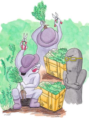 「第四章 ブラック系?農業法人の章⑥」~水菜の収穫と2人のおばあさん~