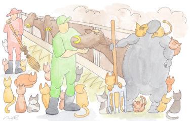 「第三章 女性牛飼いの章③」~20匹の猫たち~