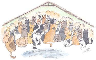 「第三章 女性牛飼いの章⑨」~猫の部屋~